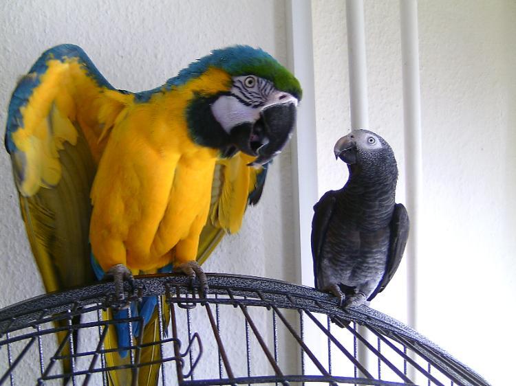 старшим попугай жако купить в ростове на дону пожалуйста можно носить